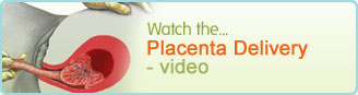 Placenta Delivery animation