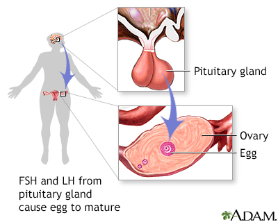 FSH and LH from pituitary gland