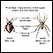 Arthropods, basic features